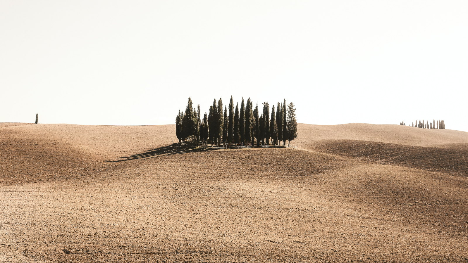 Photo by Cristina Gottardi on Unsplash